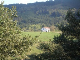 Gipuzkoa abre hasta el 29 de Junio el plazo para sus ayudas forestales
